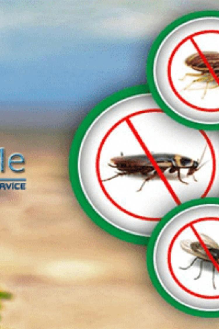 List Of Best Pest Control Services Near Me In Bangalore Rodent Control Mosquitos Control Termites Co In 2020 Best Pest Control Pest Control Services Rodent Control