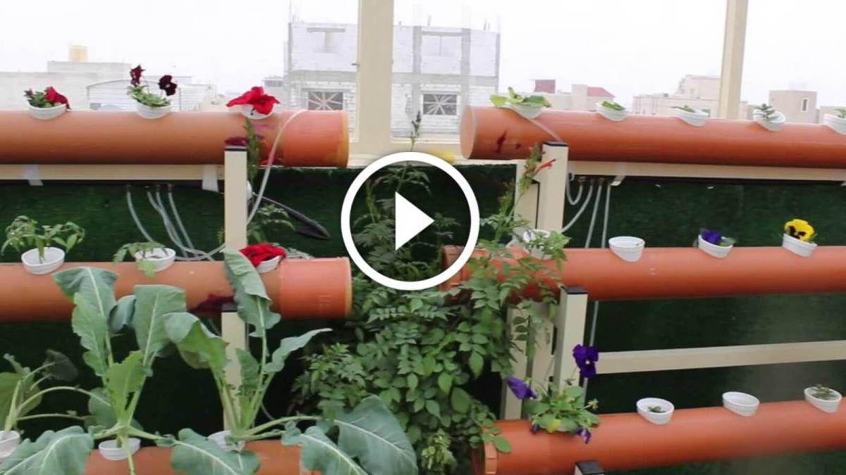 فيديو زراعة اسطح المنازل انواع النباتات واهم المعاملات الزراعية