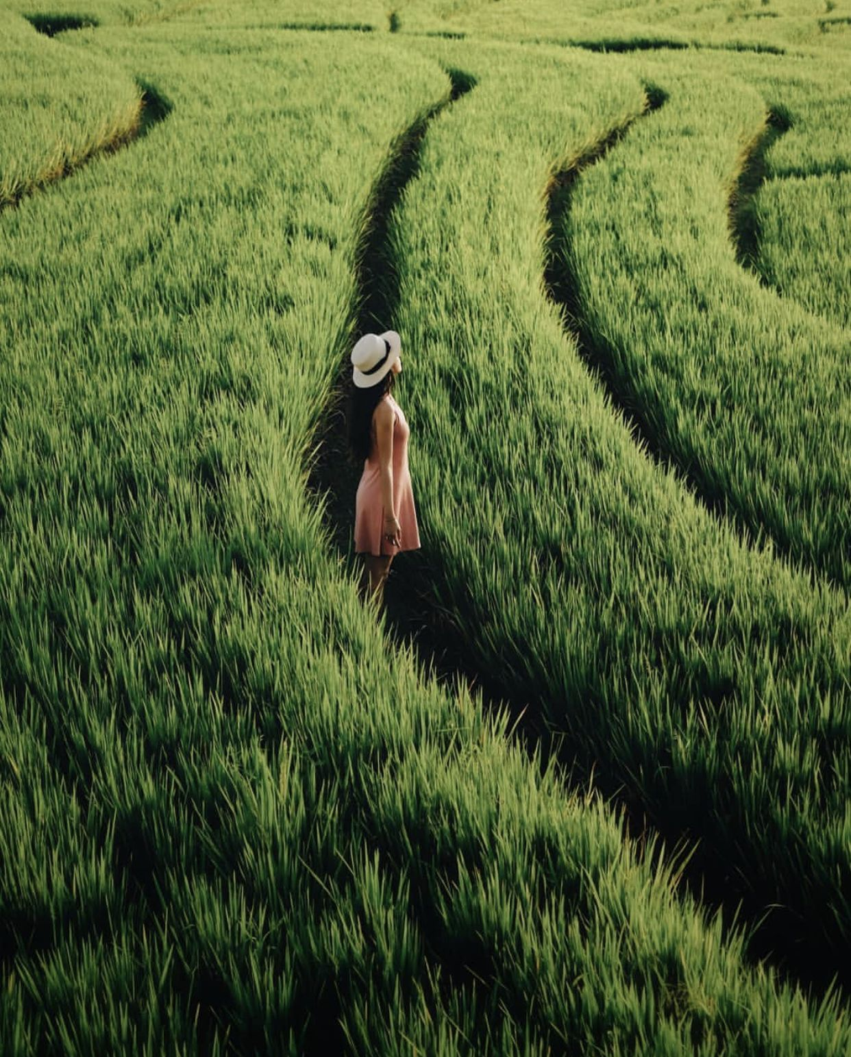 Rice Terraces in Canggu Bali in 2020 Bali travel