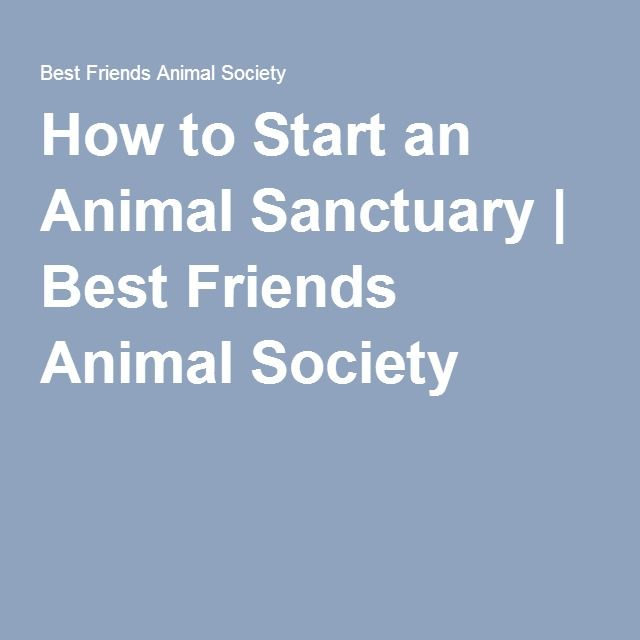 How to Start an Animal Sanctuary #animalrescue