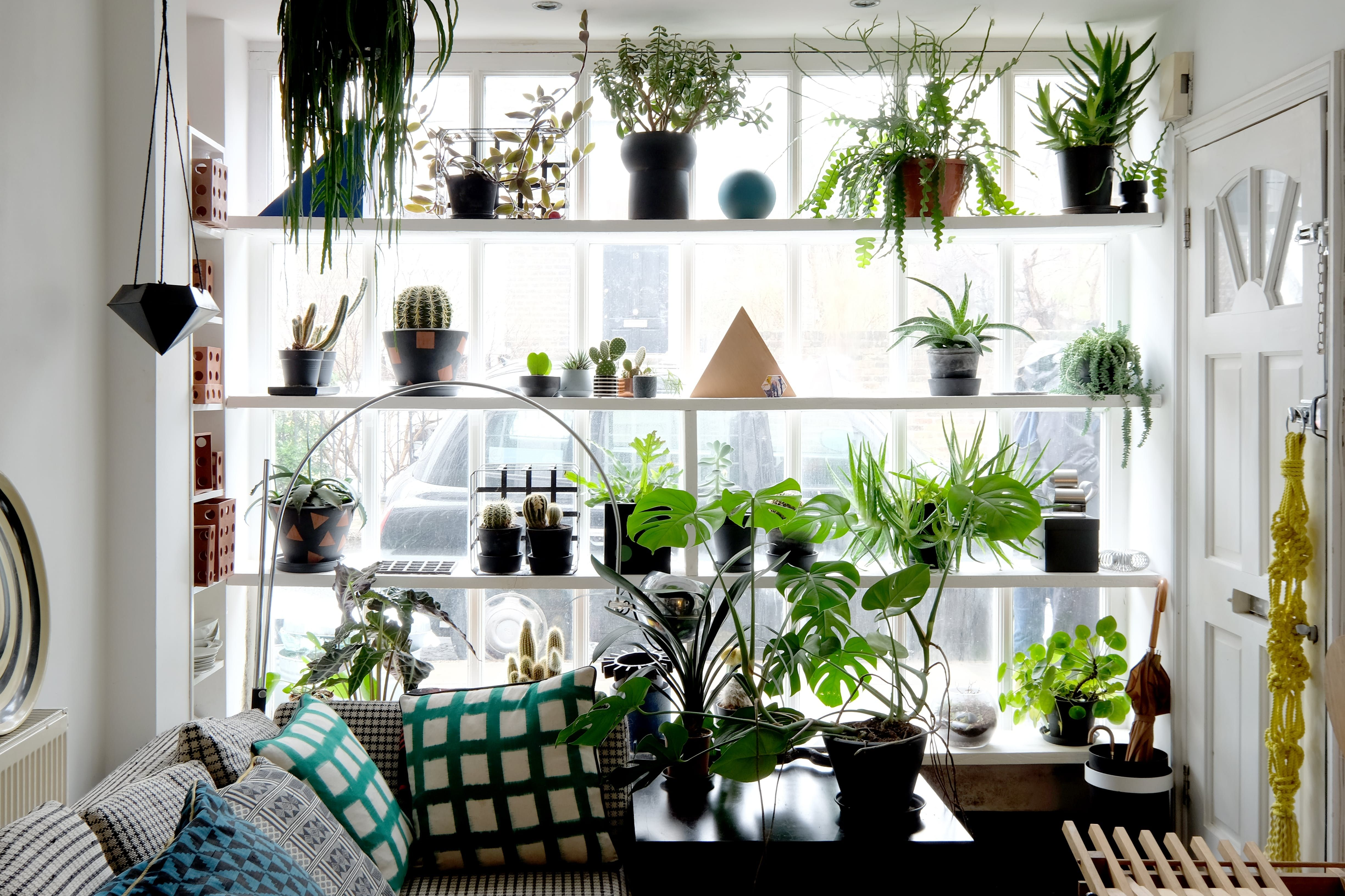 A Graphic Geometric 500 Square Foot London Rental Flat Easy House Plants House Plants Indoor Hanging Plants Indoor