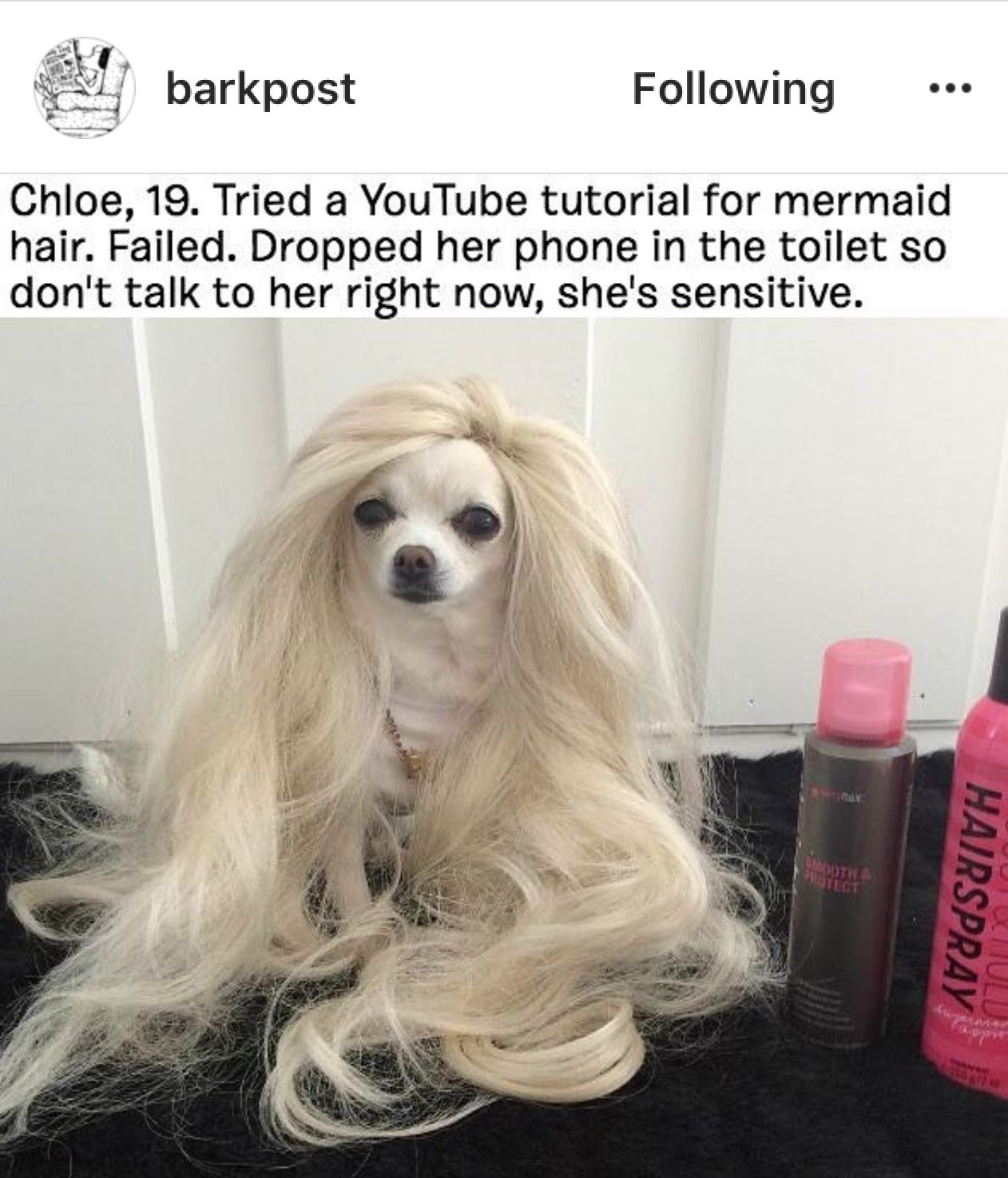 Pin by abbie on funny pinterest dog animal and memes