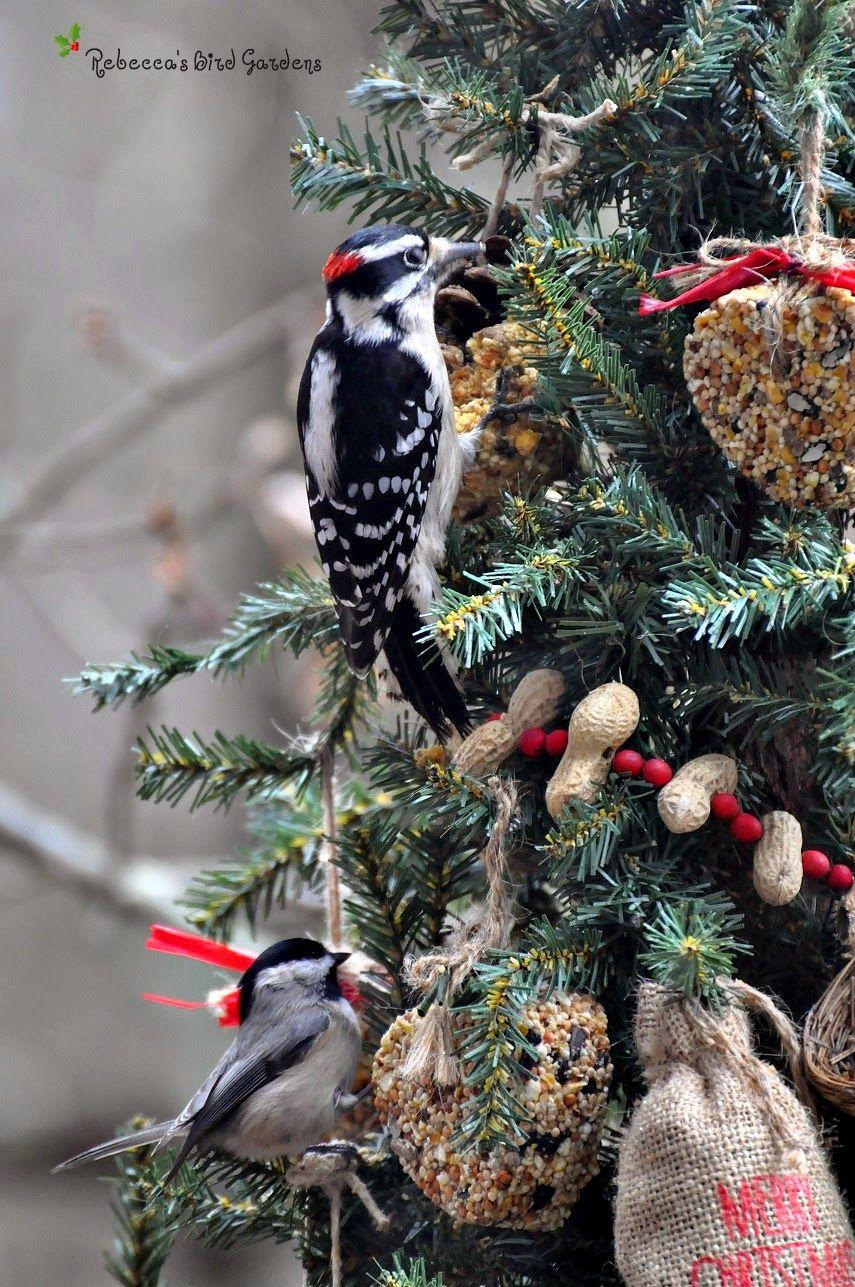 rebeccas bird gardens blog a christmas tree for the birds - Outdoor Christmas Tree Decorations For Birds