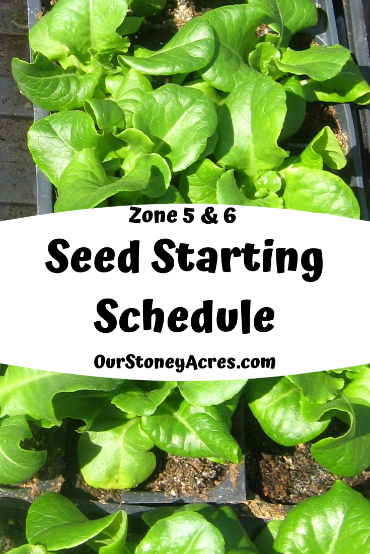 6 Seed Starting Schedule is part of Seed starting, Food garden, Garden design layout, Edible garden, Natural garden, Garden design plans - 6 Seed Starting Schedule can start as early as January with lettuce & other greens  March & April are the months for starting most of your crops!
