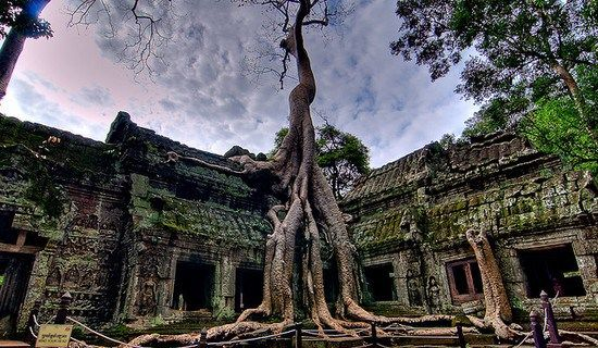 Image result for silk Cotton ta prohm