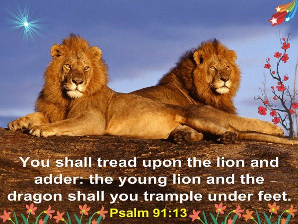 Psalm 91:13...my favorite Bible verse ever.   Funny lion pictures ...