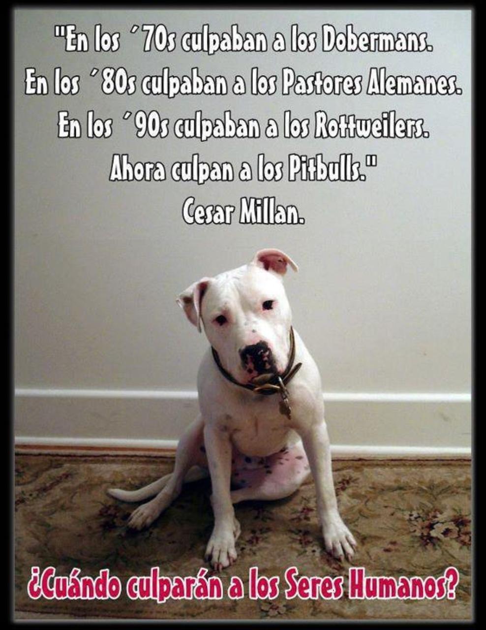 Muy Cierto Perros Frases Perros Y Cuidar Animales