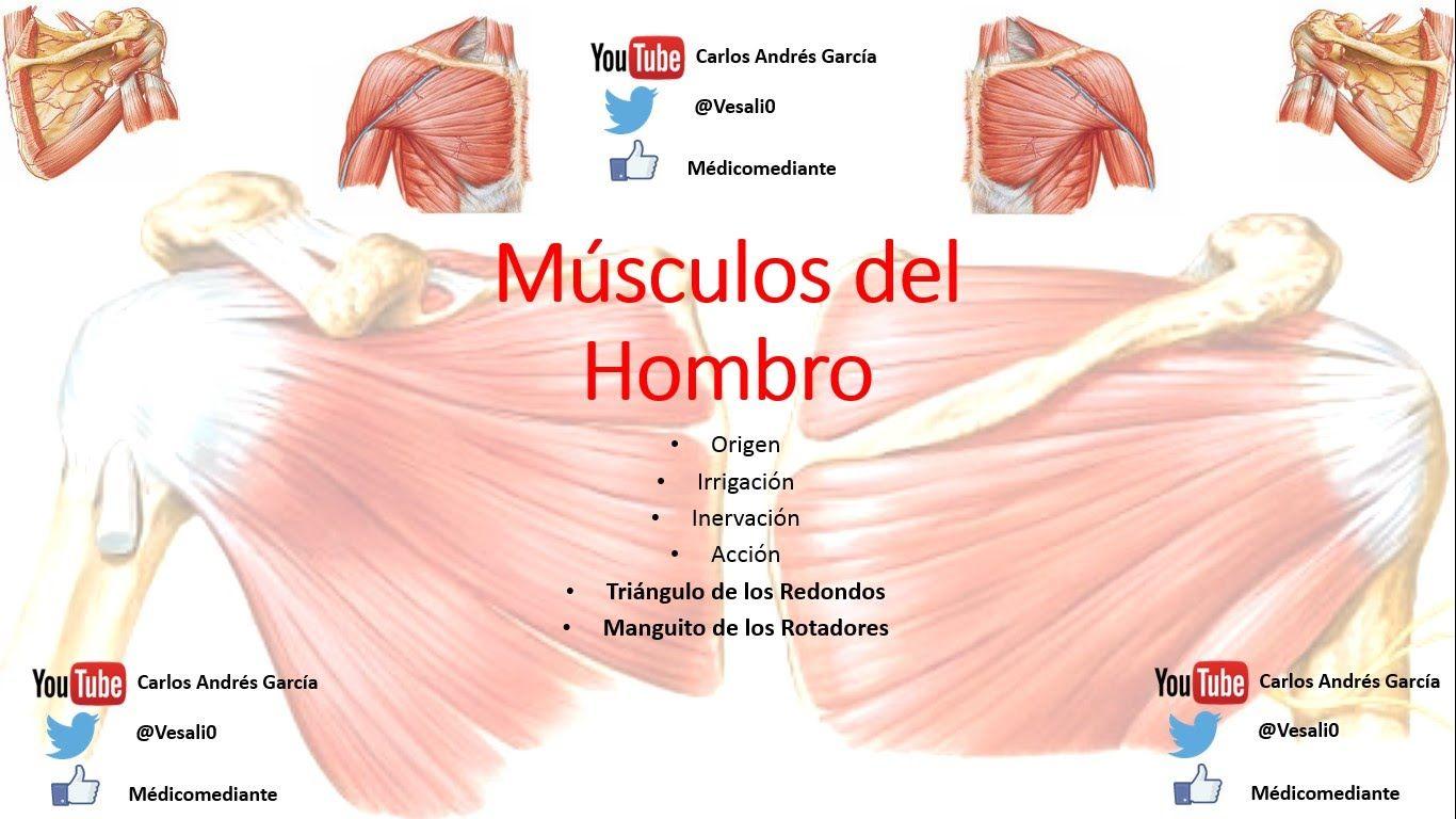 Anatomía - Músculos del Hombro (Inserción, Acción, Irrigación ...