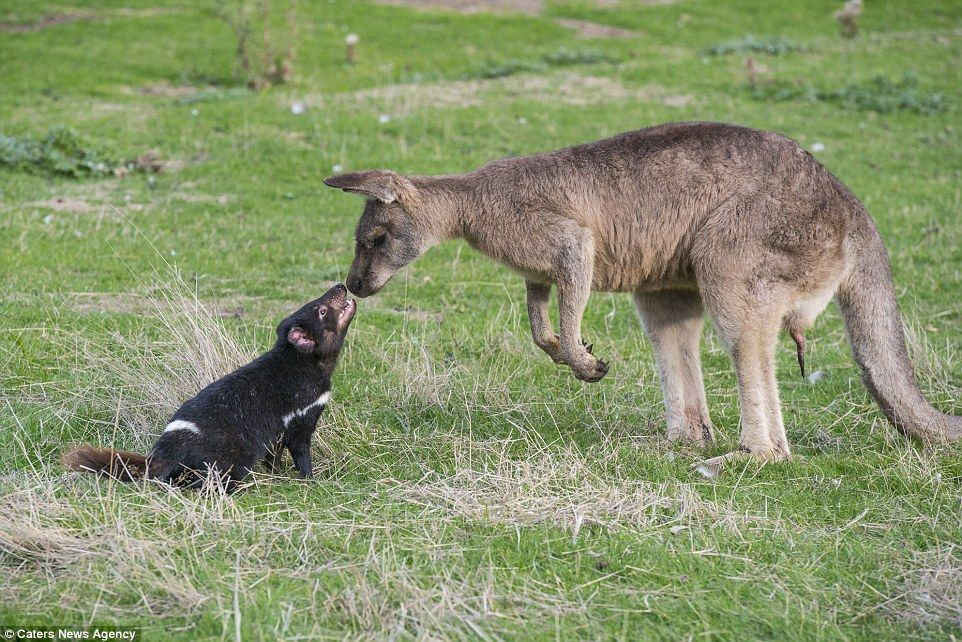 Purr Fect Animals In The Wild Can Become The Most Unlikely Pals