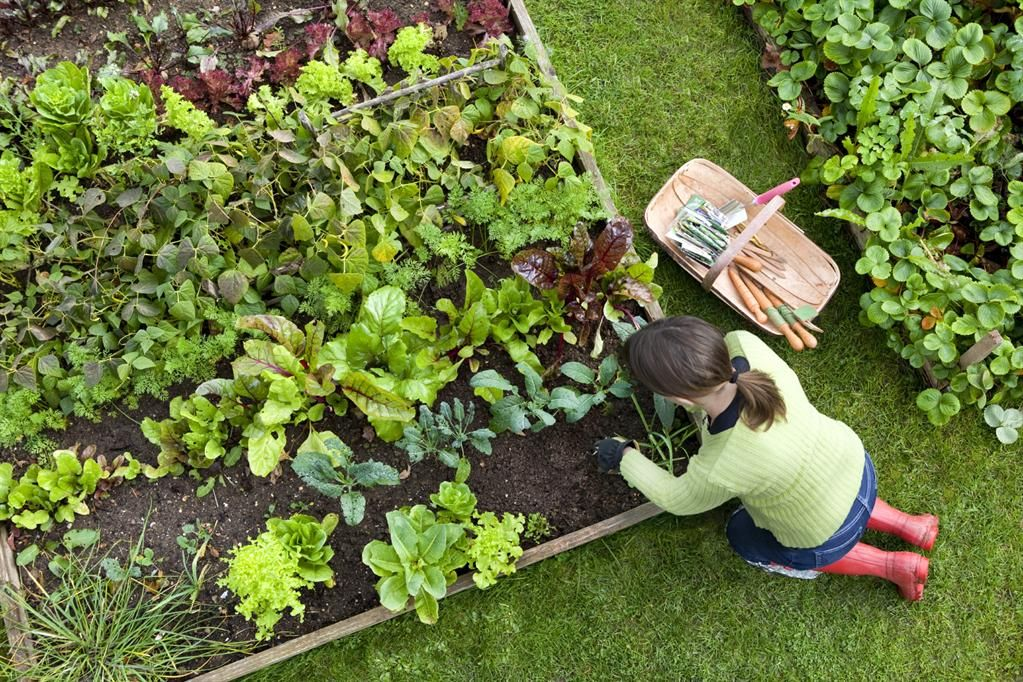 garden view from above gardening love starting a vegetable rh pinterest com