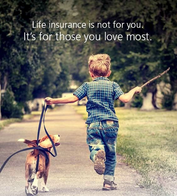 Need Life Insurance Get an instant quote at SafariFinancial.com 731-217-1731 #insurancequotes