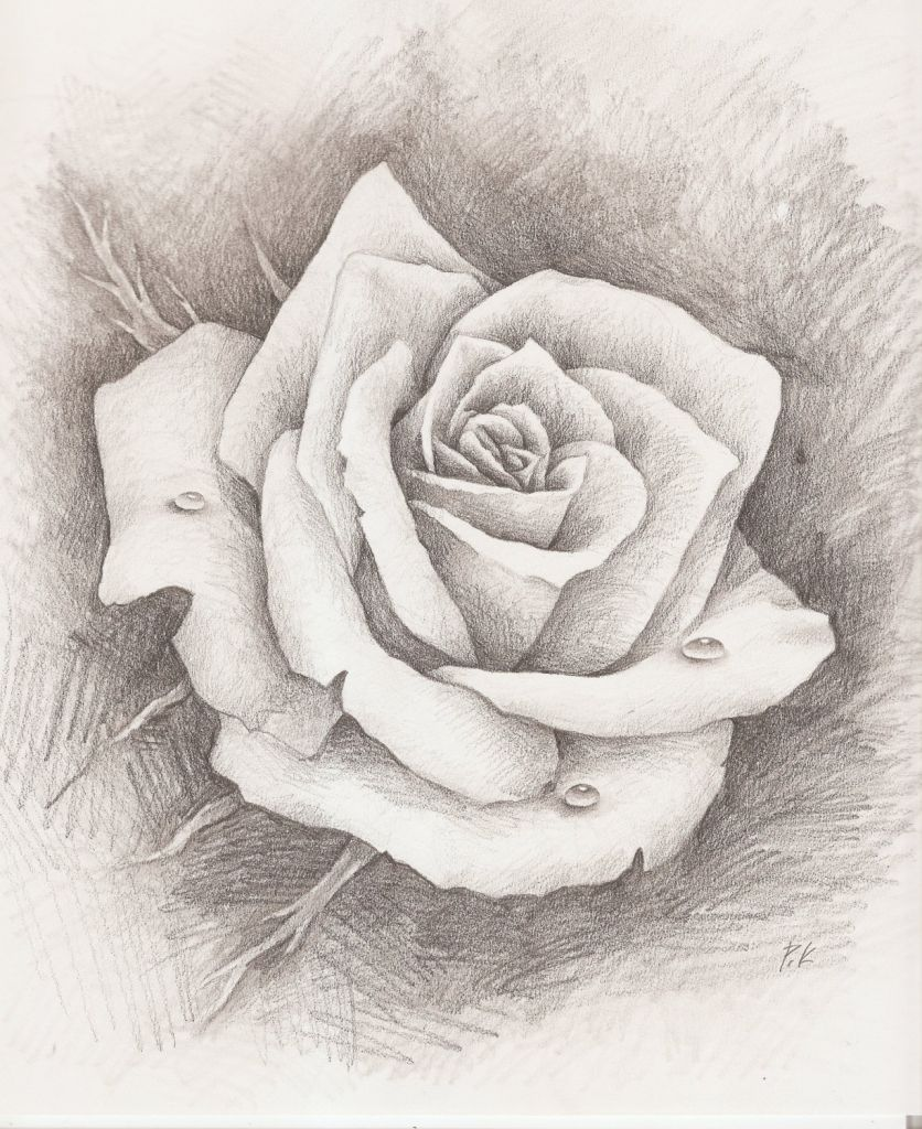 Pencil Drawn Roses Free Download Drawings Pencil Roses Simple Pencil Drawings Rose Photo Pencil D Roses Drawing Rose Drawing Pencil Pencil Drawings Of Flowers