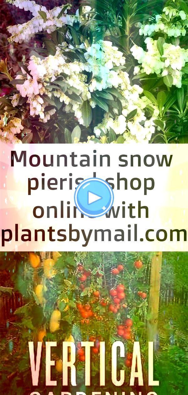 snow pieris  shop online with Mountain Snow Pieris VerticalGardeningGrowUpNotOutforMoreVegetablesandFlowersinMuchLe Fermob Luxembourg Duo Low Armchair  Bon Marché...