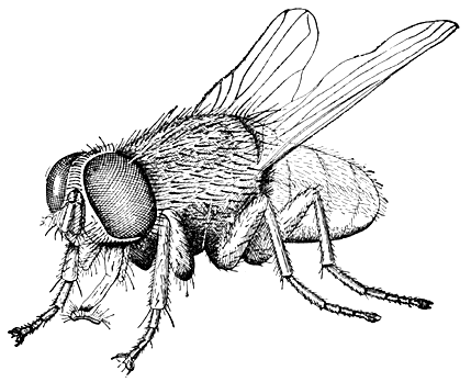 Bug and Insect Coloring Pages and