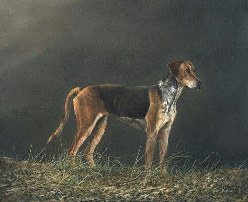 Cobweb, one of the Fife Foxhounds. Oil on canvas.