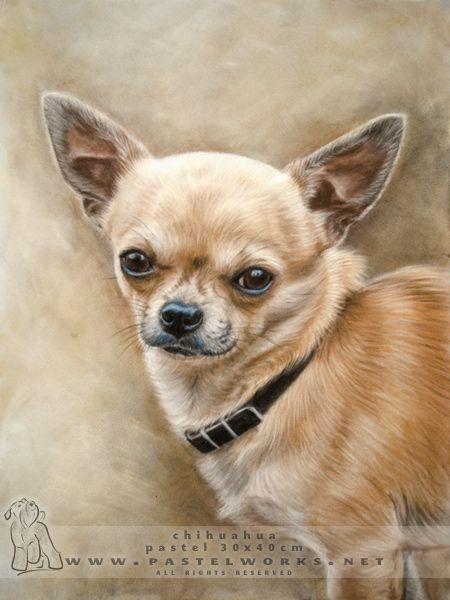 Chihuahua Dog Paintings Chihuahua Chihuahua Dogs