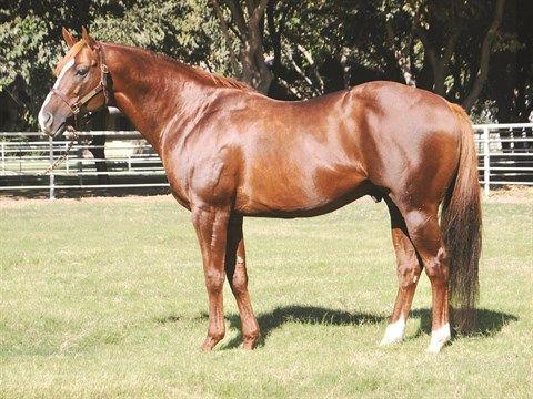 Lucky Pulpit - Stallion Register Online