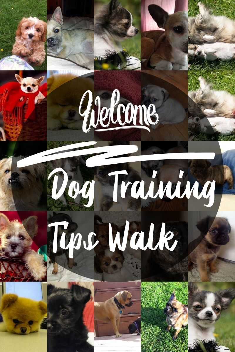 Great Dog Training Tips Walks Guidelines That Can Help Any Pet