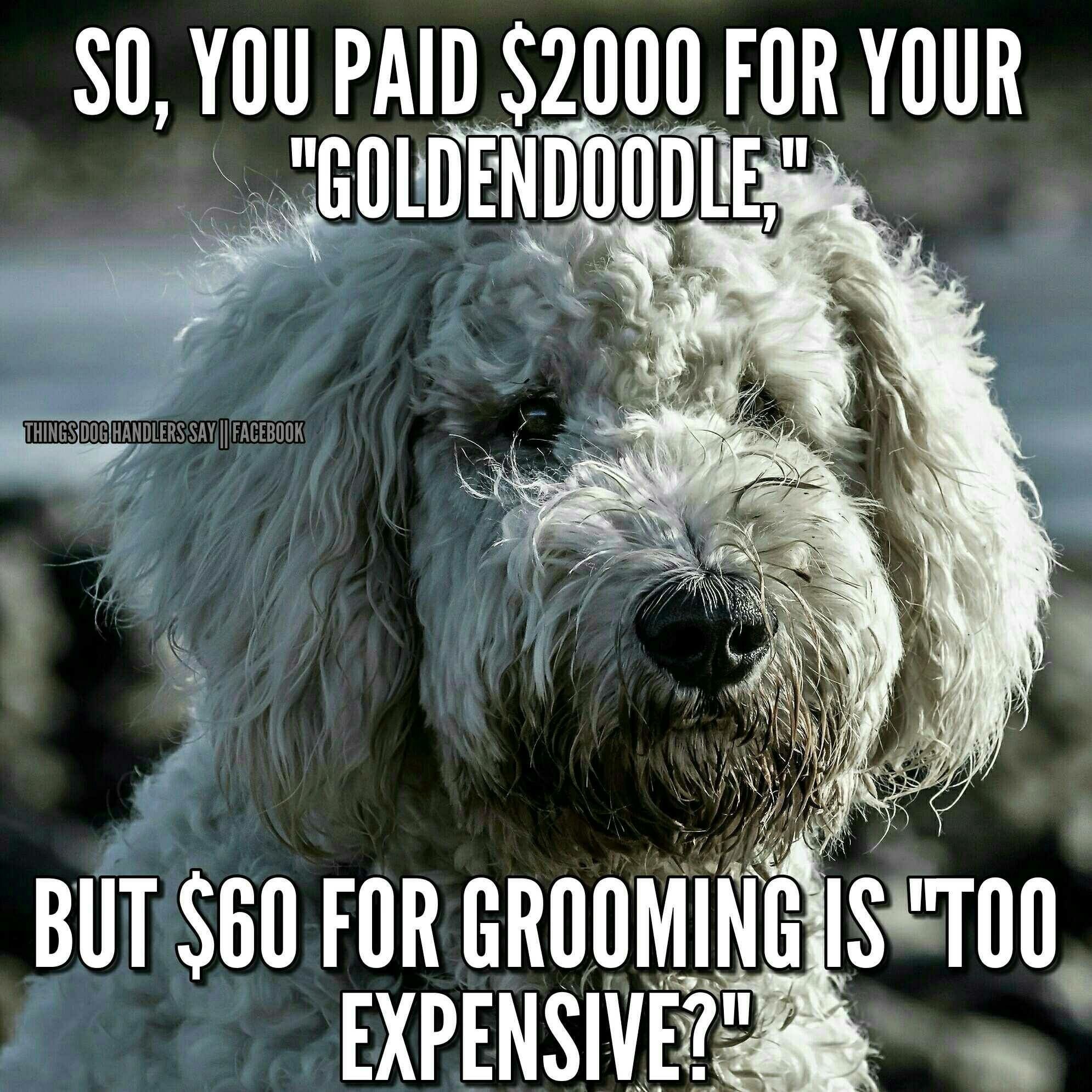 Umm if you pay $60 for doodle groom you\'re making out like a bandit ...