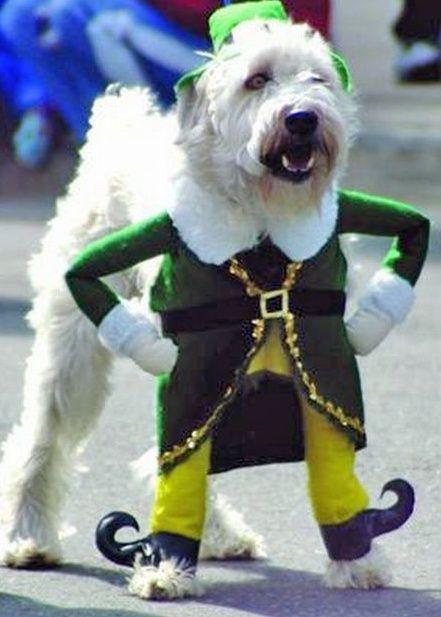 Funny Pet Costumes Pet Costumes Dog Costumes Irish Dog