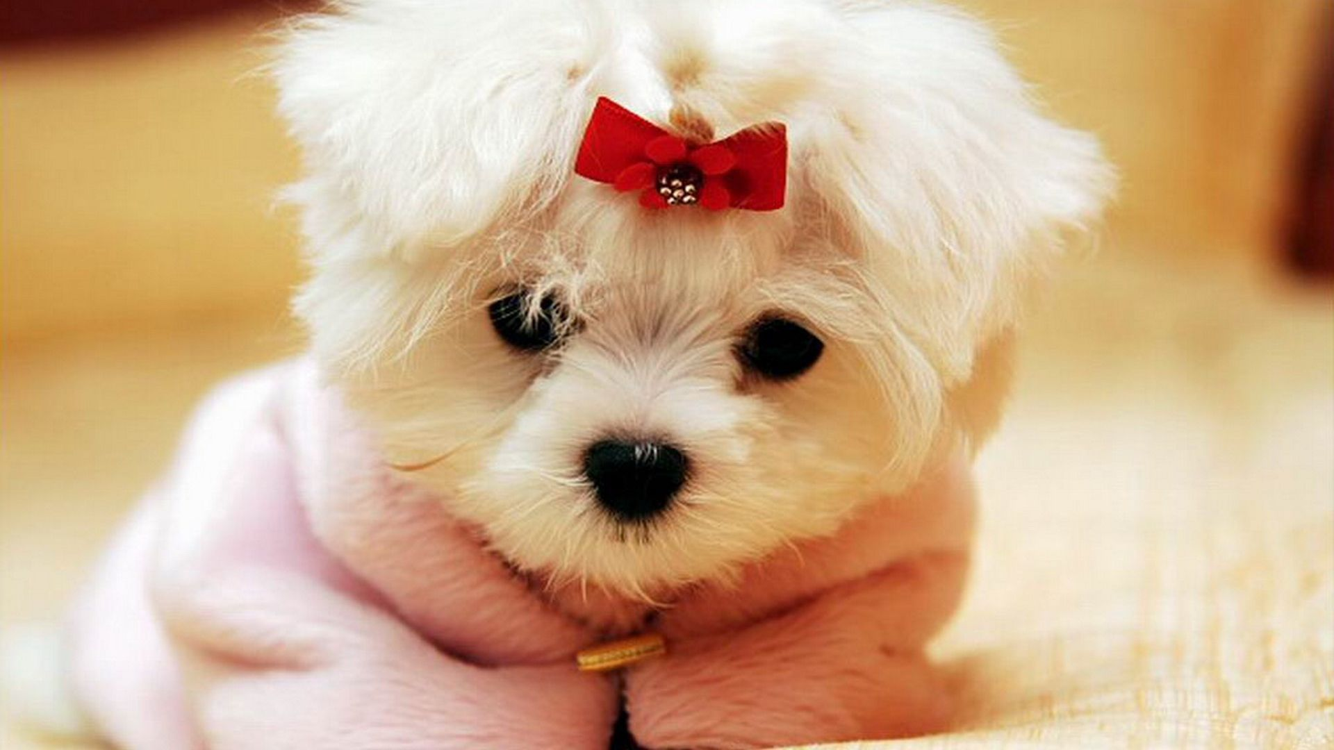 Dogs Wallpapers Full Hd P Best Hd Dogs Wallpapers Cute Animals