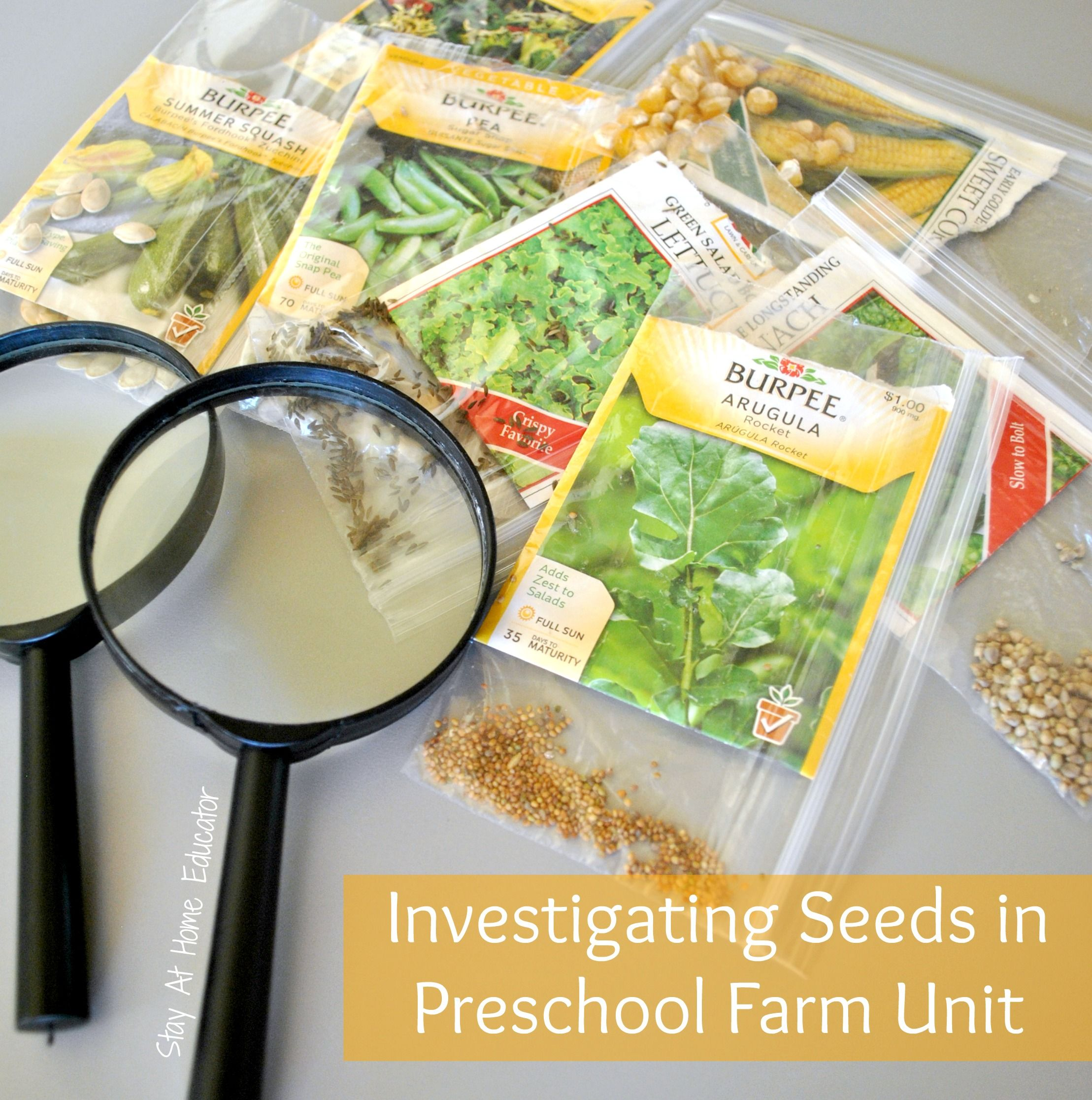 7 Ways To Explore Seeds In A Preschool Farm Theme Science