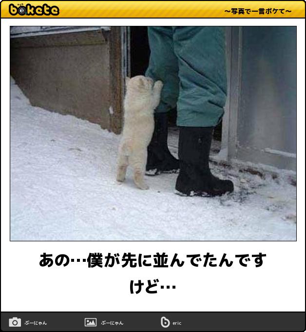 可愛いだけじゃ物足りない 犬の画像でボケてみた11選 かわいい動物の赤ちゃん 面白い犬の写真 犬のおもしろ写真