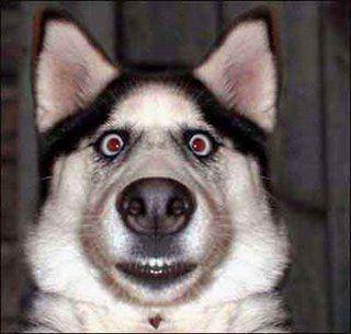Funny Avatar Pic Funny Dog Fails Funny Animal Faces Funny Dog