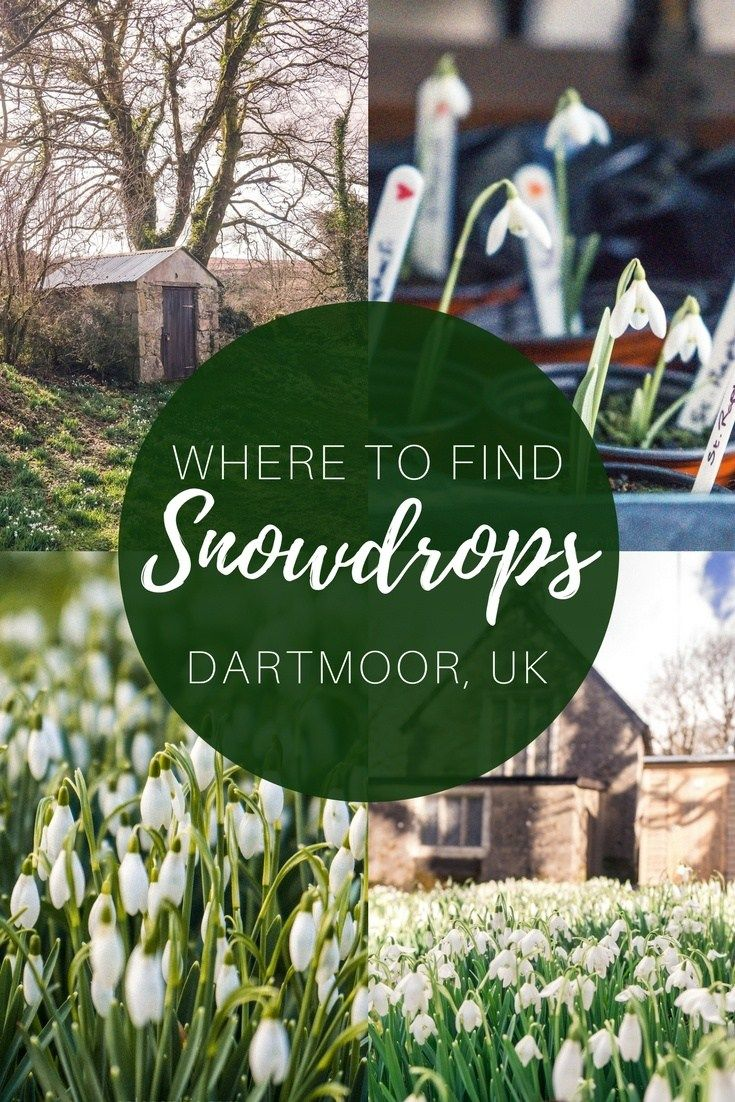 Snowdrops on Dartmoor, Devon, England: Here's where to find the very best spring blooms in the National Park. The quaint church of Huccaby, dedicated to St Raphael.