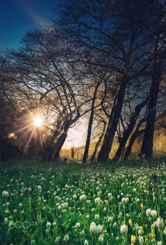 Find The Man By Makis Bitos Trees Sky Landscape Sunset Nature Flower Light Man Colors Argyria Agac