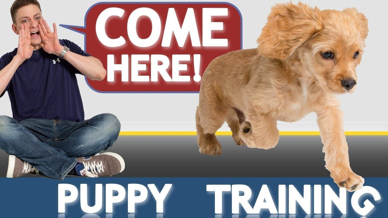 0a435d96d9a8e97f96a96aa74bb6cd56 - How Do You Get A Puppy To Come When Called