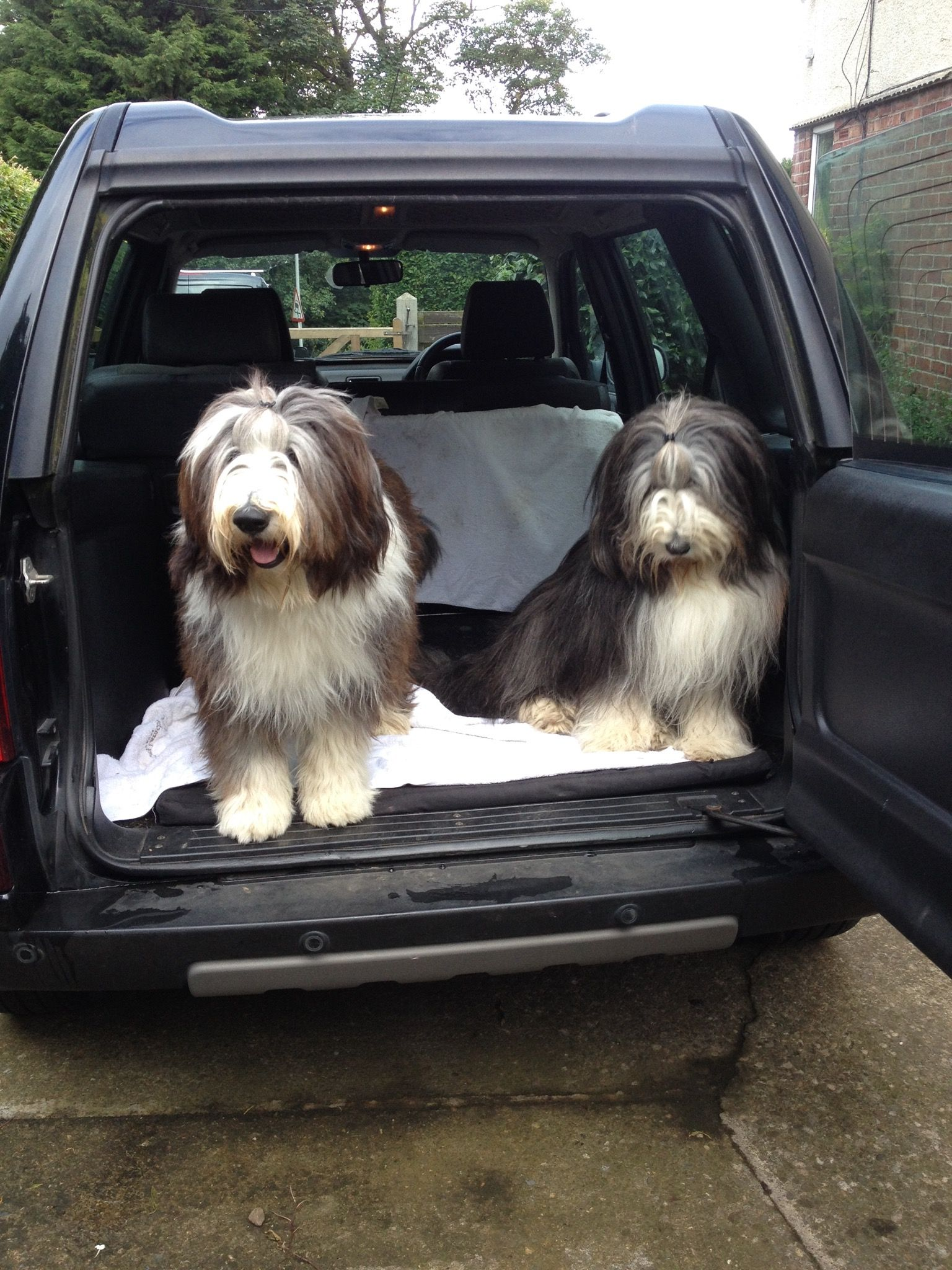 Pin By Kim Conover Nye On Doggies Bearded Collie Puppies Old English Sheepdog Collie Puppies