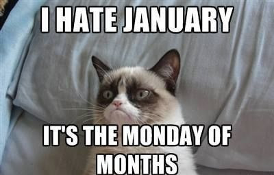 Click The Link To View Full Size Image And View Todays Viral Pictures Grumpy Cat Quotes Cat Quotes Funny Grumpy Cat Humor