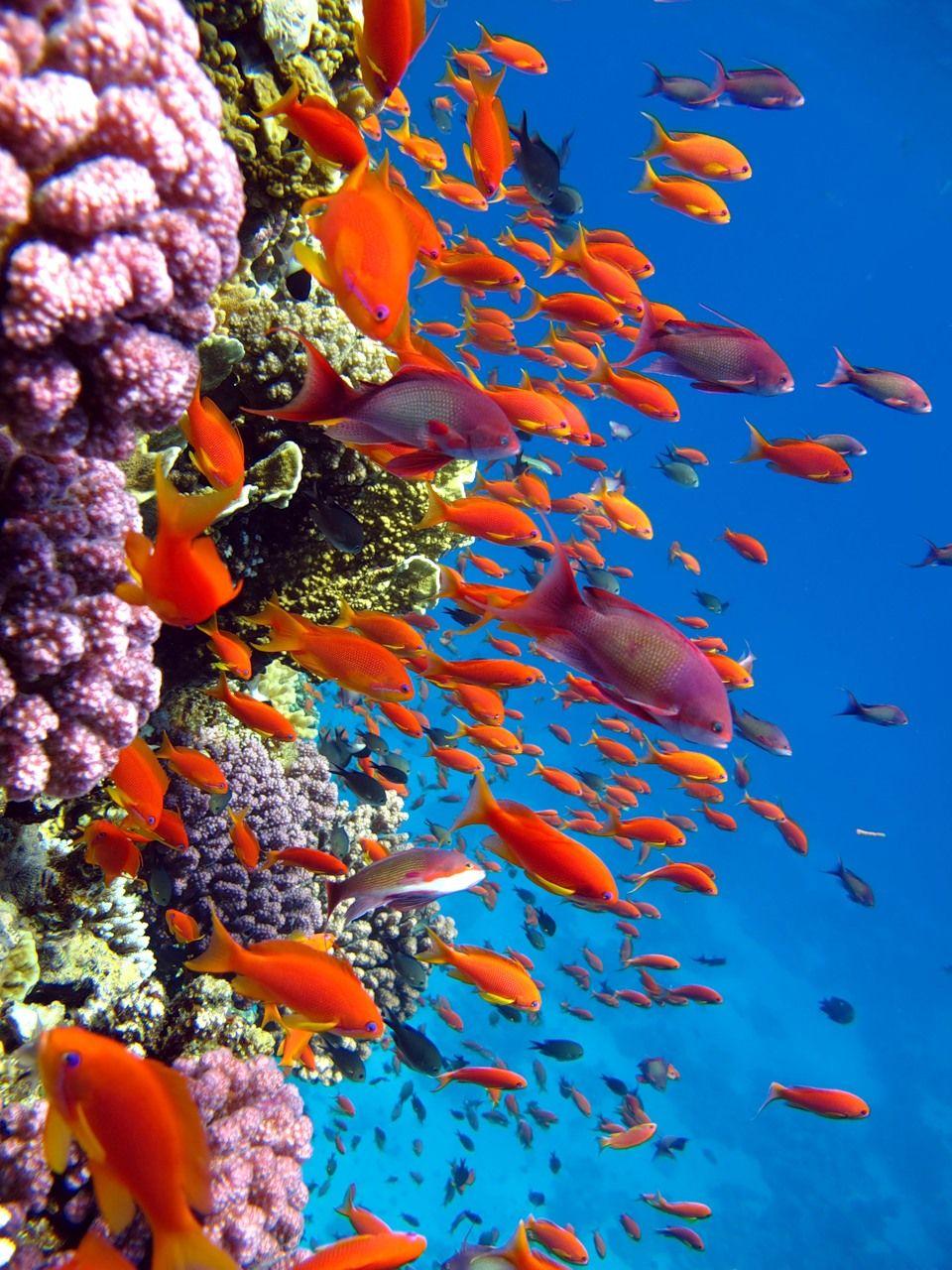 bright undersea colors justcutepics com coral reef saltwater rh pinterest com