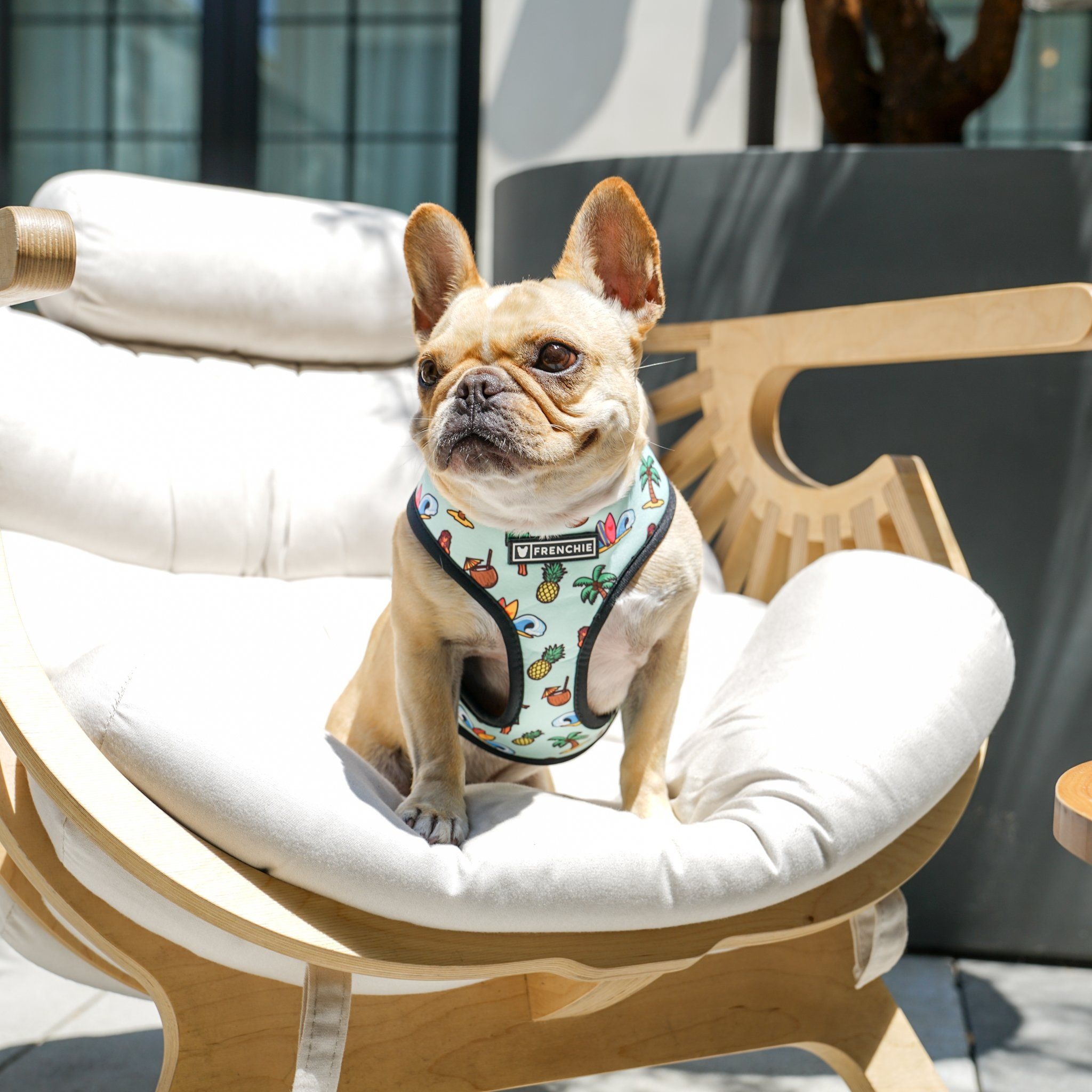 Frenchie Duo Reversible Harness Maui Wowie French Bulldog