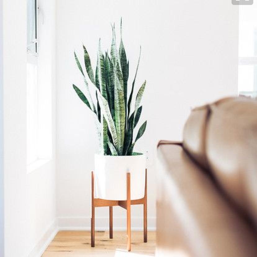 Planters · House PlantsPlants In The HomeLiving Room Plants DecorPlants ...