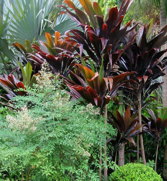 Nevell Garden Coffs Harbour Garden Expressions Landscape Design For Residential Commercial And Tropical Garden Design Landscape Design Australian Garden