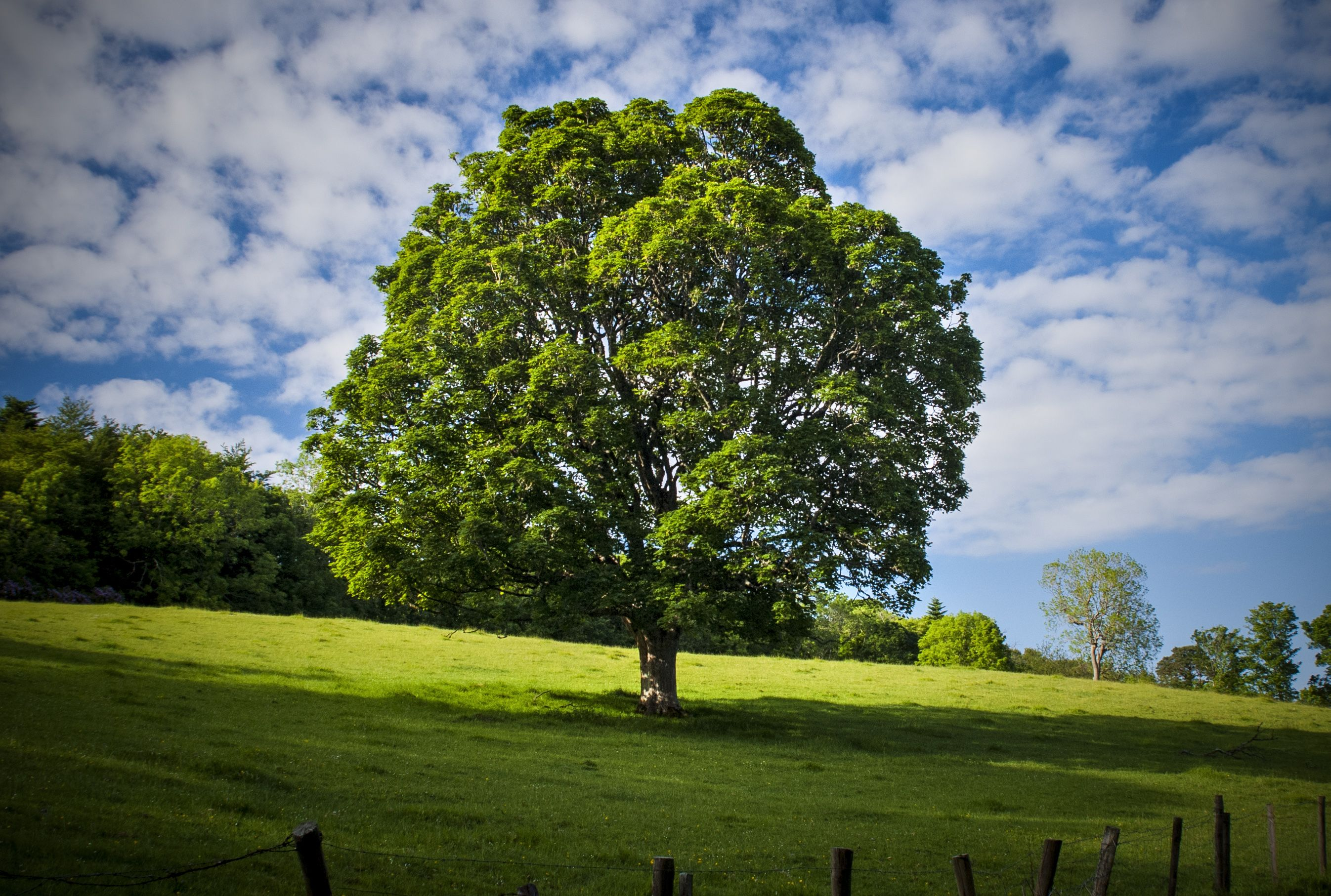 Pin by Amy Stoker on Trees and landscapes Tree wallpaper