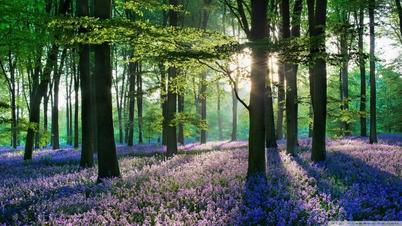Woodlands in Europe: More tree species, more benefits