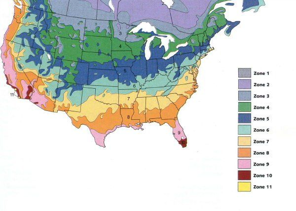 Ginseng Zone Map For Planting Garden Stuff Pinterest Plants - Us planting zones map