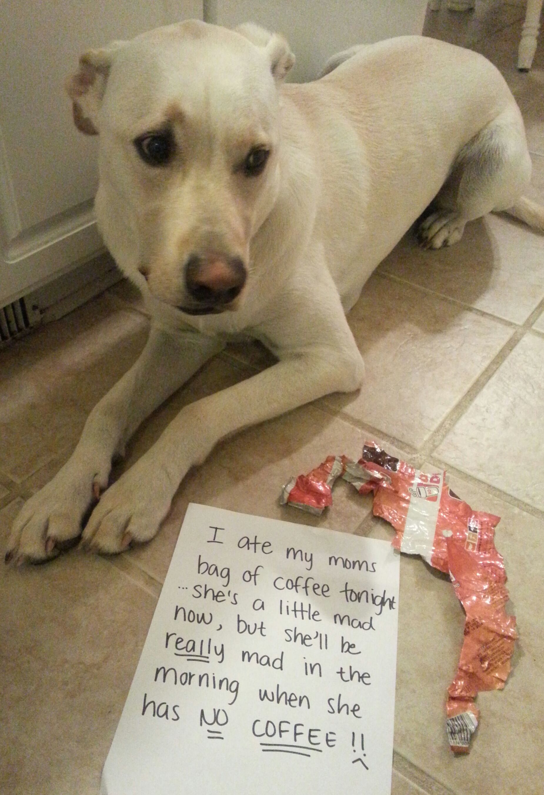 """Someone needed a late day """"pickmeup""""! Dog shaming"""