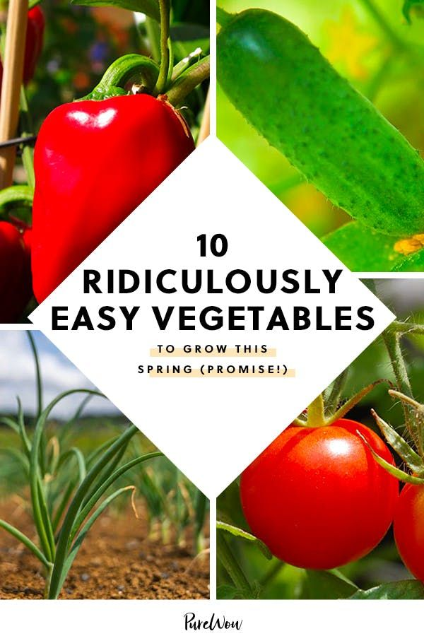 10 Ridiculously Easy Vegetables To Grow This Spring 640 x 480