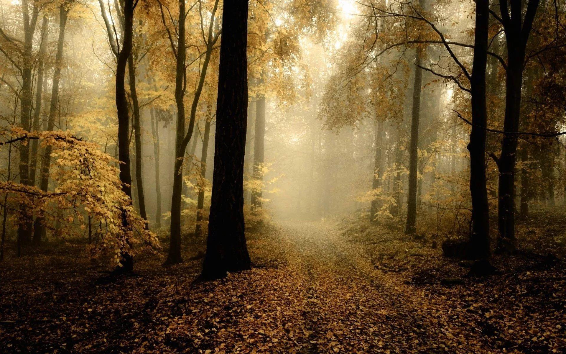 Темный осенний лес картинки
