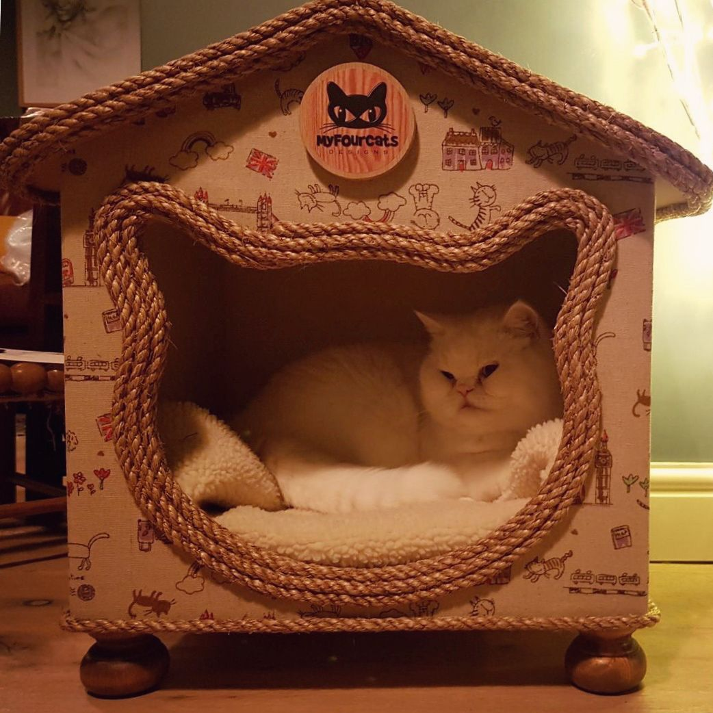 Cat Cats Designsu201cBeautiful happy cat customers cat