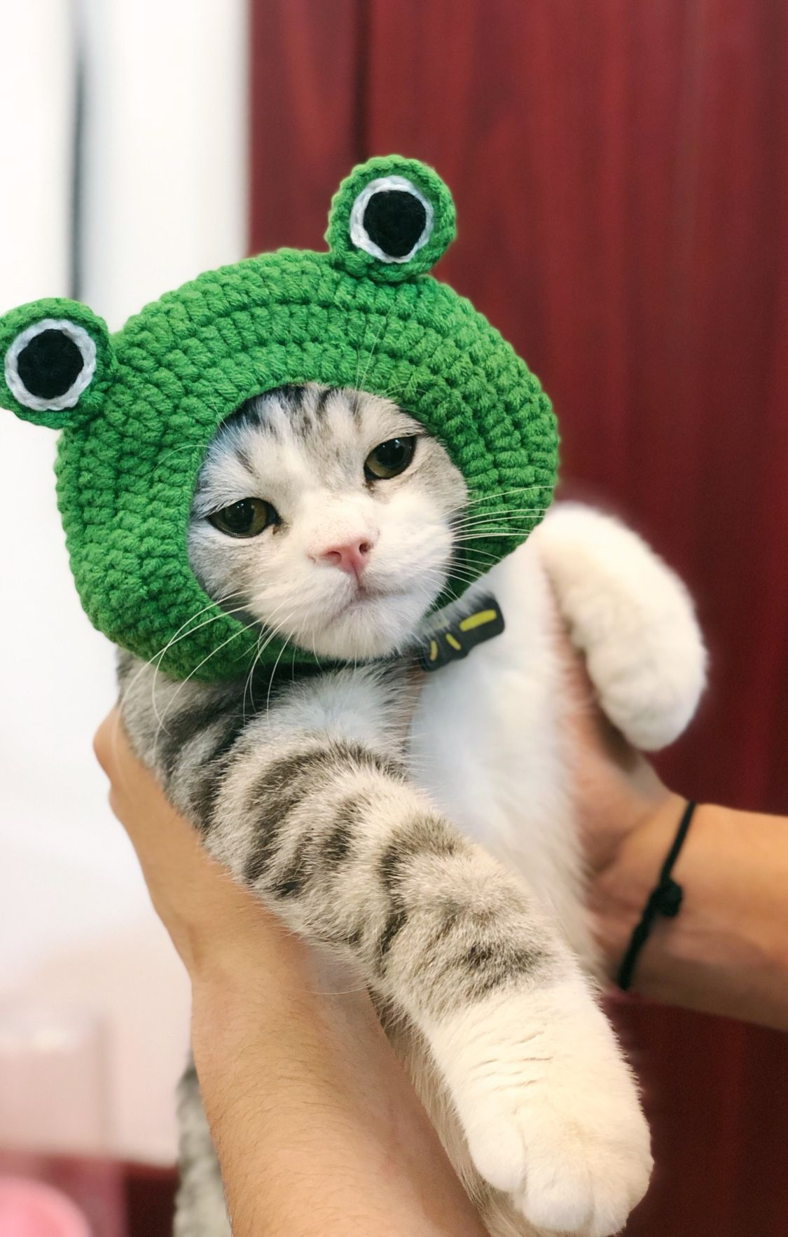 Lovely Frog Knit Pet Dog Cat Accessories Cute Kitten Animal Costume Kittens Cutest Cat Accessories Animal Costumes