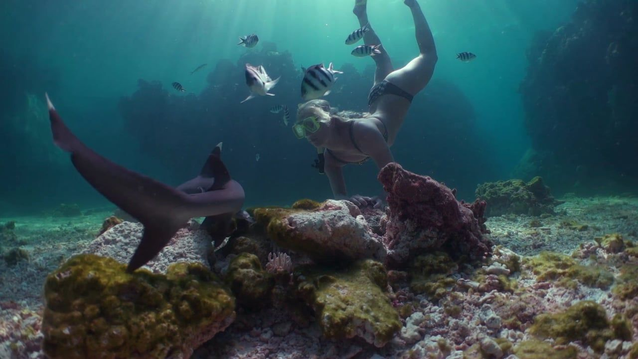 Amazing diving in Fiji. A once in a lifetime dive