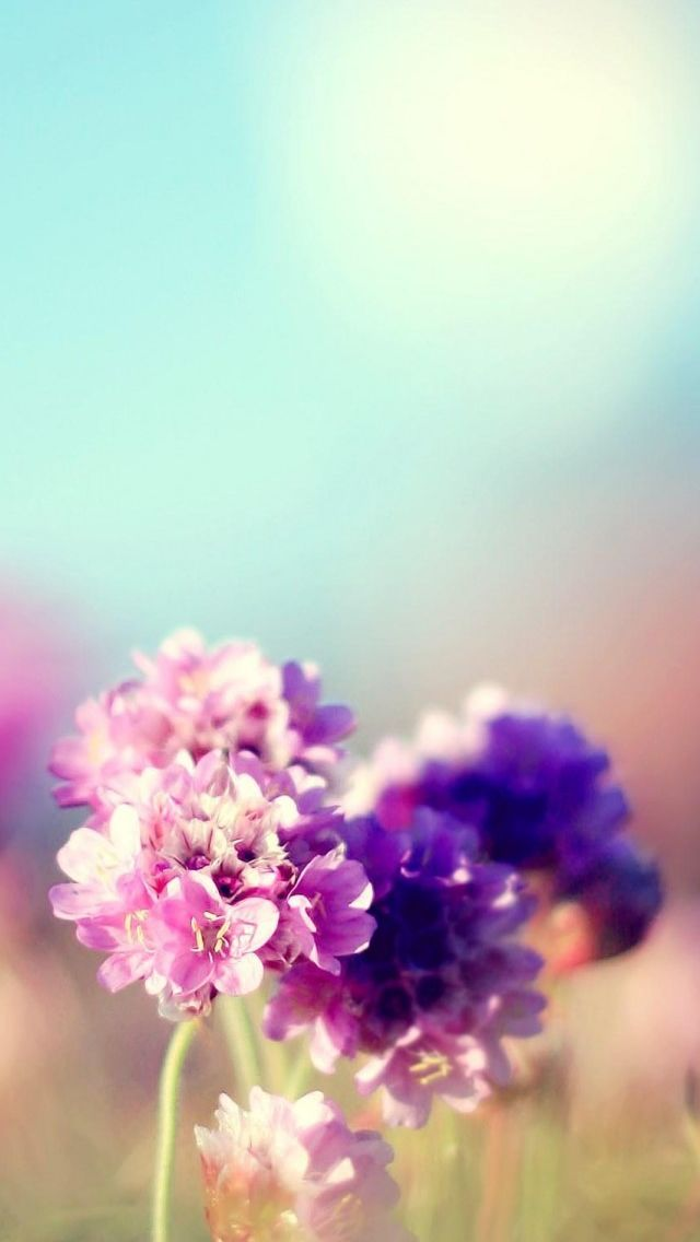 Flowers Field Nature Sunny Iphone 5s Wallpaper Iphone Wallpaper Flowers Phone Wallpaper