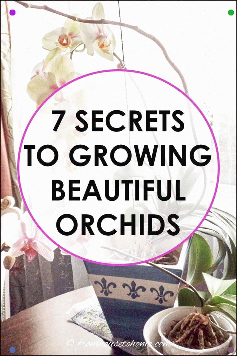 Photo of These Tips For Growing Orchids In Pots Are Awesome All The Orchid Care Secrets Y…