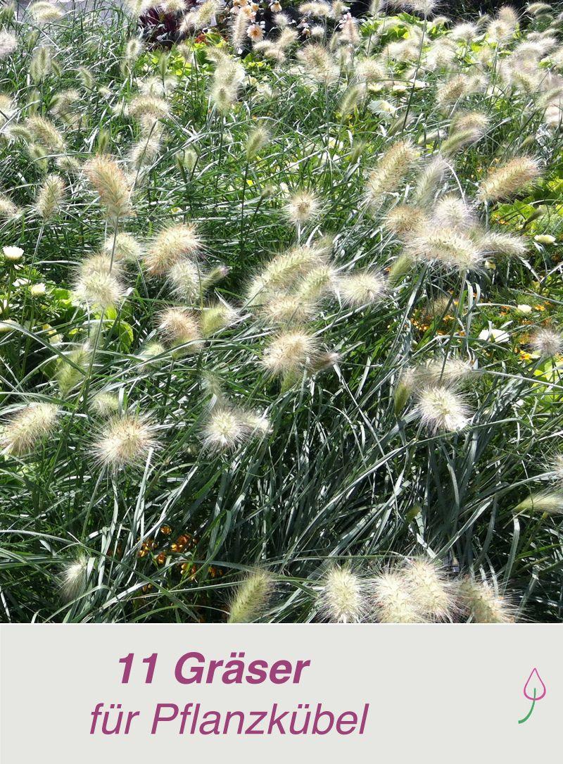 Die 11 schönsten Gräser für Pflanzkübel