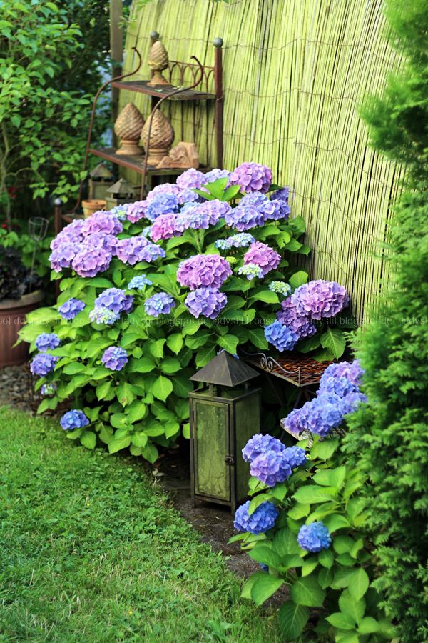Hortensien Im Schatten das absolute sommer highlight 2016 gartenecke hortensien und